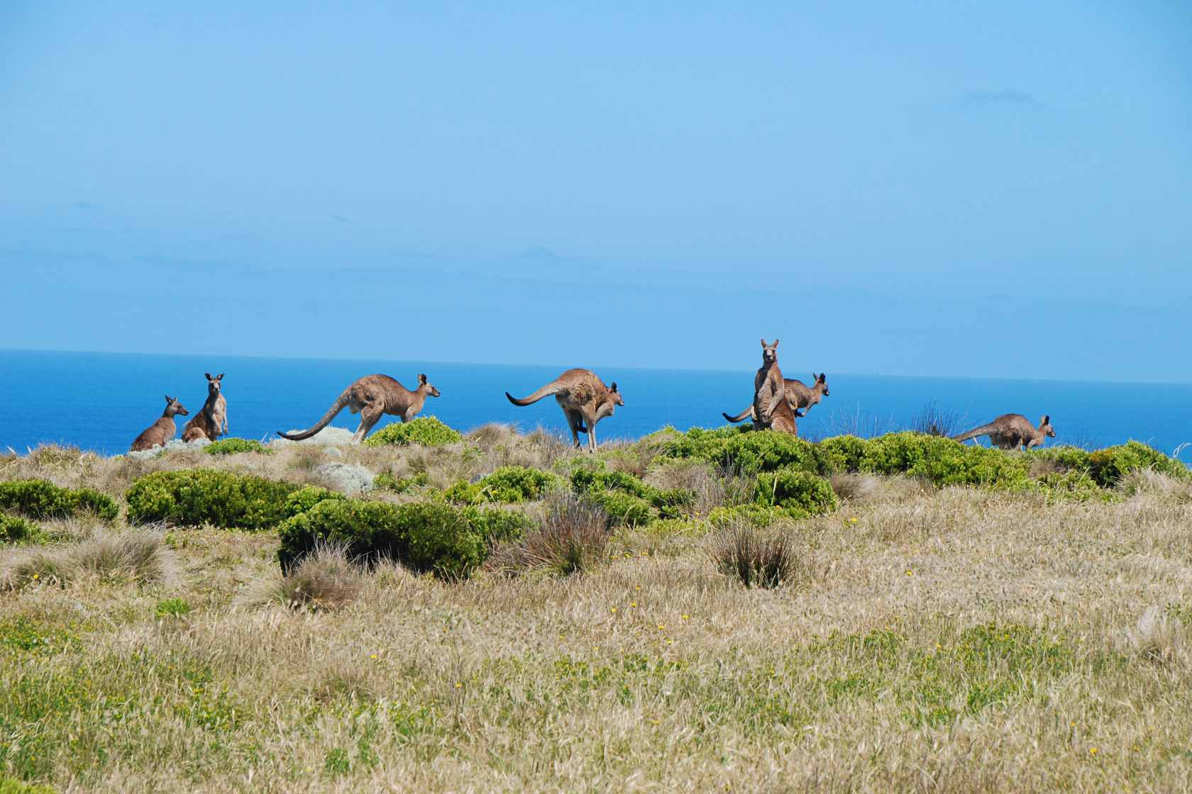 Reiseberichte Australien Southern Australia