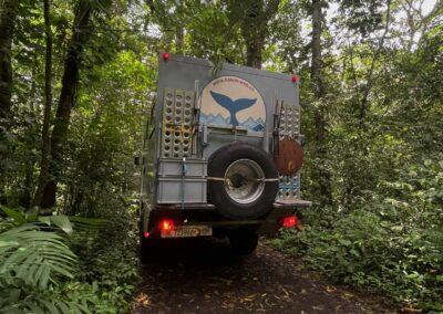 Whaly im Dschungel